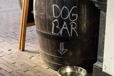 Dogs get their own special bar at Uiltje Bar